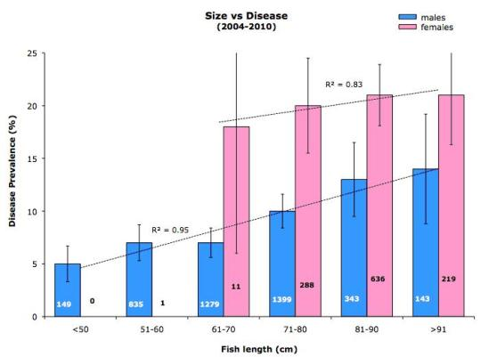 Size vs Disease 2004 - 2010